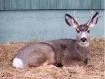 Back Yard Buck!!
