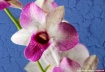 Textured Orchid