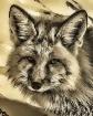 Leo the Fox
