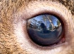 In Your Eyes...er...