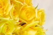 Yellow Tenderness