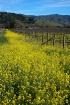 Spring in Wine Co...