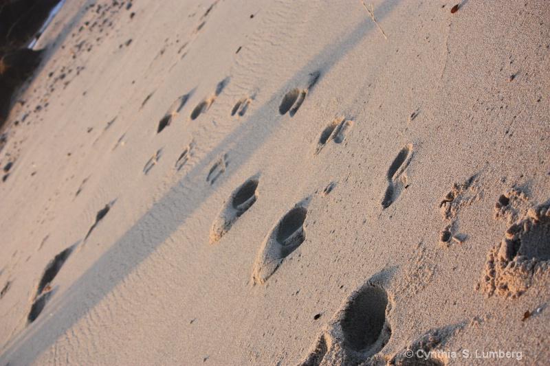 Footprints. . . - ID: 9885434 © Cynthia S. Lumberg