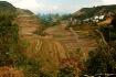 Guanxi rice field...