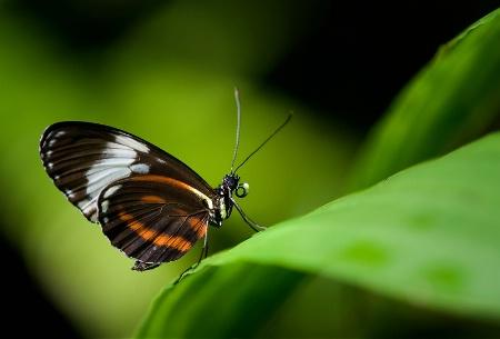 Tropical Wings