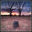 Tree Stump Blues