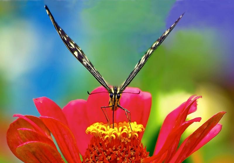 Butterfly World - ID: 9947294 © Joseph T. Pilonero