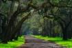 Avenue of the Oak...