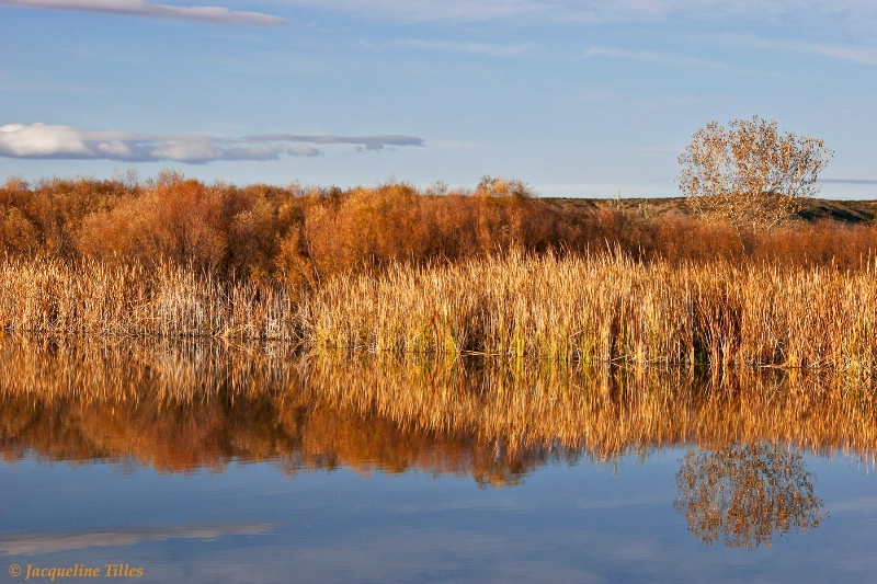 Reed Reflection - ID: 10004268 © Jacqueline A. Tilles