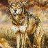 © Lena P. Ennis PhotoID# 10009188: Red Wolf