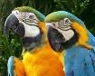 Mr. Blue & Miss G...