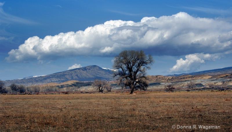 Beautiful Wyoming Today