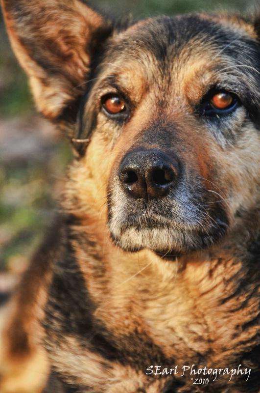 Guard Dog@@Kiev - ID: 10048659 © Shelia Earl
