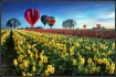 Hot air balloons ...