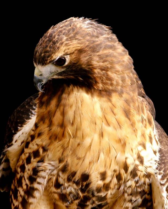 beak shot - ID: 10079894 © Katherine Sherry