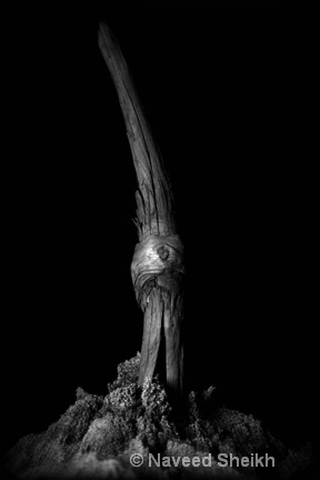 Driftwood-01