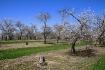 Apple Orchard 4