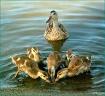 Happy Mother'...