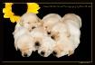 Seven Golden Babi...