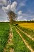 Tree in the field...