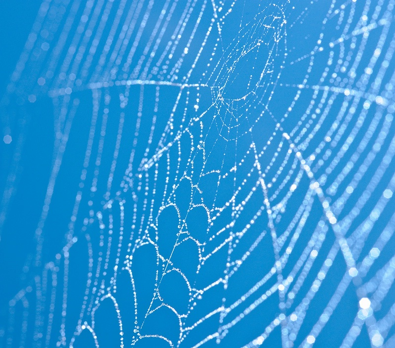 Oh What a Spangled Web You Weave