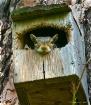 Stolen Birdhouse ...