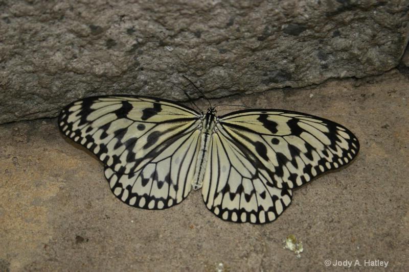 Paper Kite - ID: 10168868 © Jody A. Hatley