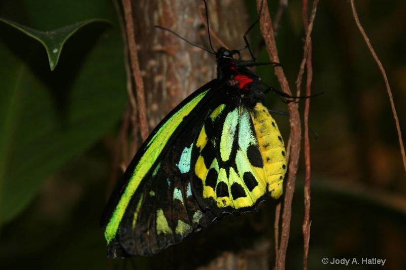Butterfly - ID: 10168870 © Jody A. Hatley