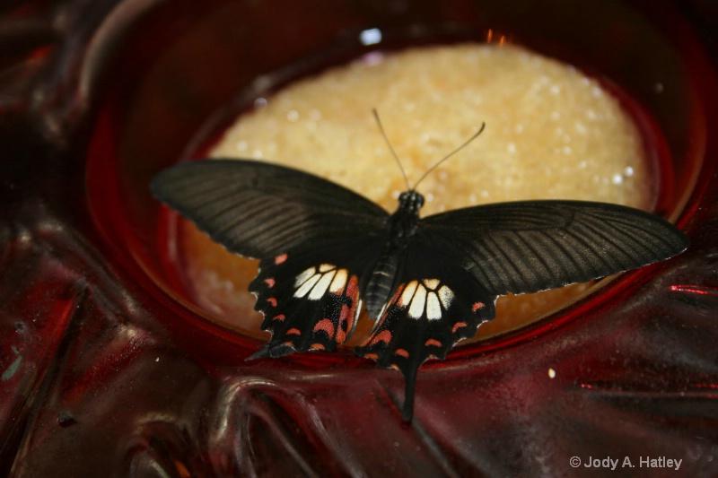 Butterfly - ID: 10168872 © Jody A. Hatley