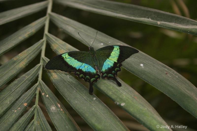 butterfly - ID: 10168875 © Jody A. Hatley