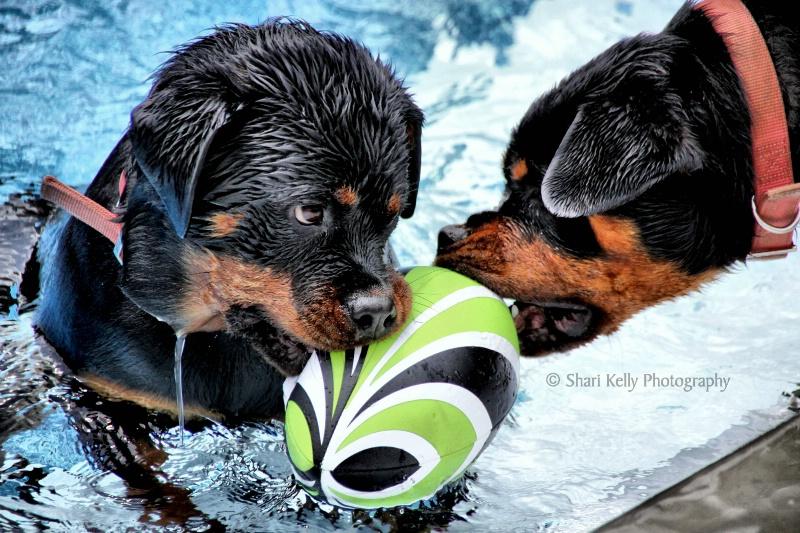 {Water Wars}
