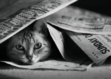 Sunday Morning Paper