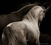 Equine Dance
