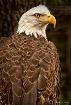 Eagle at Tampa