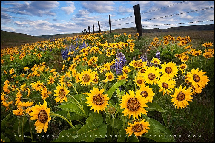 Dalles Mountain Flowers