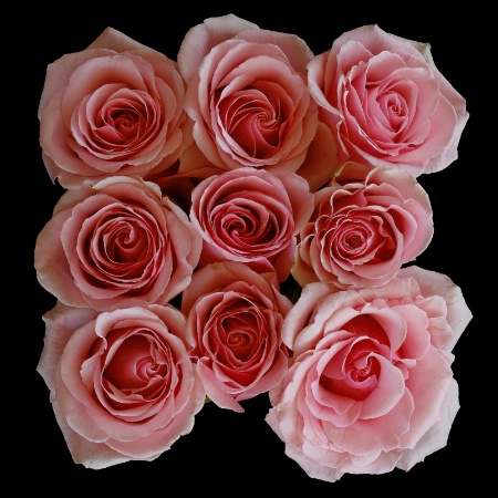 Roses For Jennie