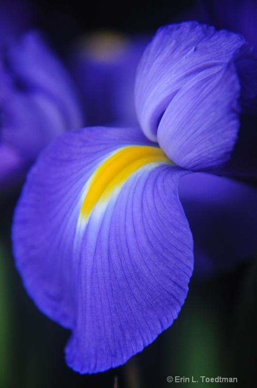Iris Eyes are Smilin'