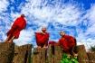 Buddhist Land
