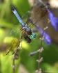 Pond Flutterings