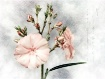 Oleander again