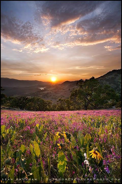 Greensprings Sunset II