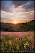 Greensprings Suns...