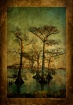 Cypress View