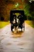 Your Carriage Awa...