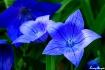 Astra Blue (ballo...