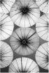 Japanese Umbrella...