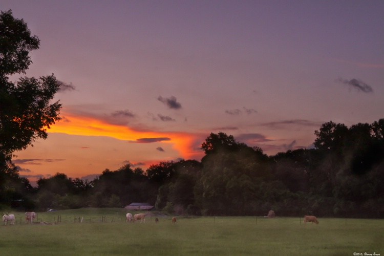 Pastoral at sunset