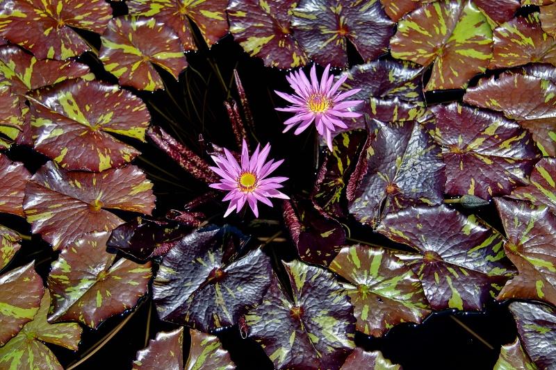 Water Colors - ID: 10424784 © Steve Abbett