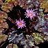 2Water Colors - ID: 10424784 © Steve Abbett