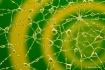 Human Spiderweb r...